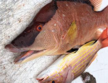 Lady Godiva Fishing Charters snapper