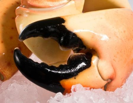 Stone Crab at John's Pass Seafood Fest