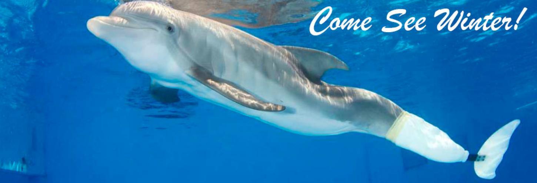 The Clearwater Aquarium Sunhost Resorts