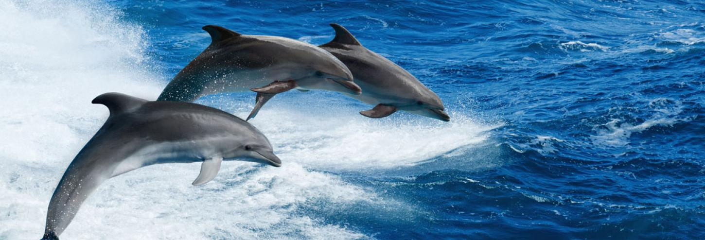 Dolphin Quest Tours