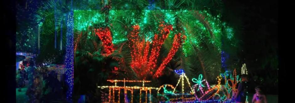 Holiday Lights in the Garden